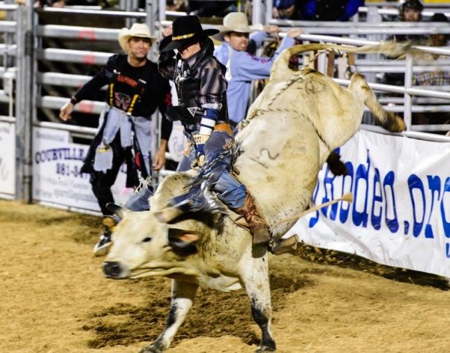Bull Riding-1-16 - Copy