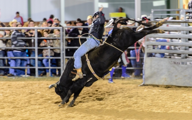 Bull Riding-1-23