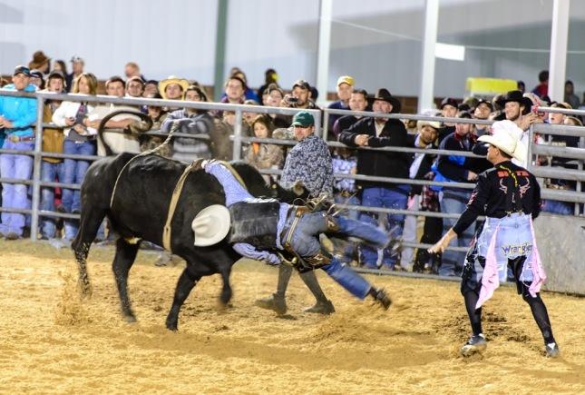 Bull Riding-1-8