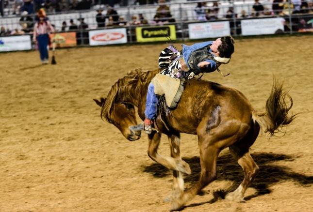 Horse Riding-1-24