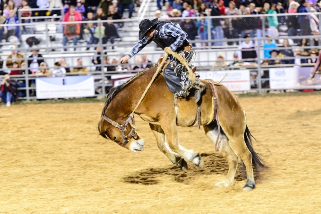 Horse Riding-1-37 - Copy